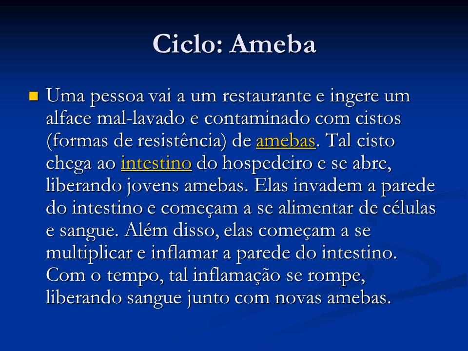 Ciclo: Ameba Uma pessoa vai a um restaurante e ingere um alface mal-lavado e contaminado com cistos (formas de resistência) de amebas.