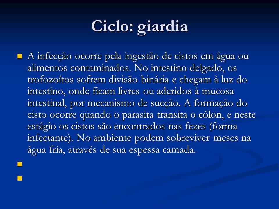 Ciclo: giardia A infecção ocorre pela ingestão de cistos em água ou alimentos contaminados.