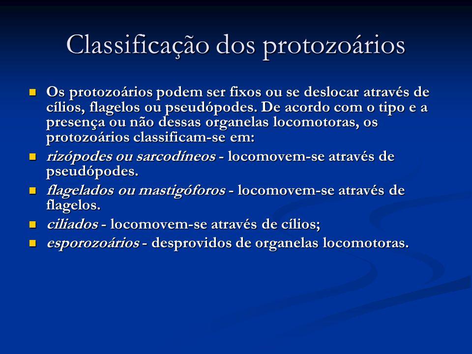 Classificação dos protozoários Os protozoários podem ser fixos ou se deslocar através de cílios, flagelos ou pseudópodes.