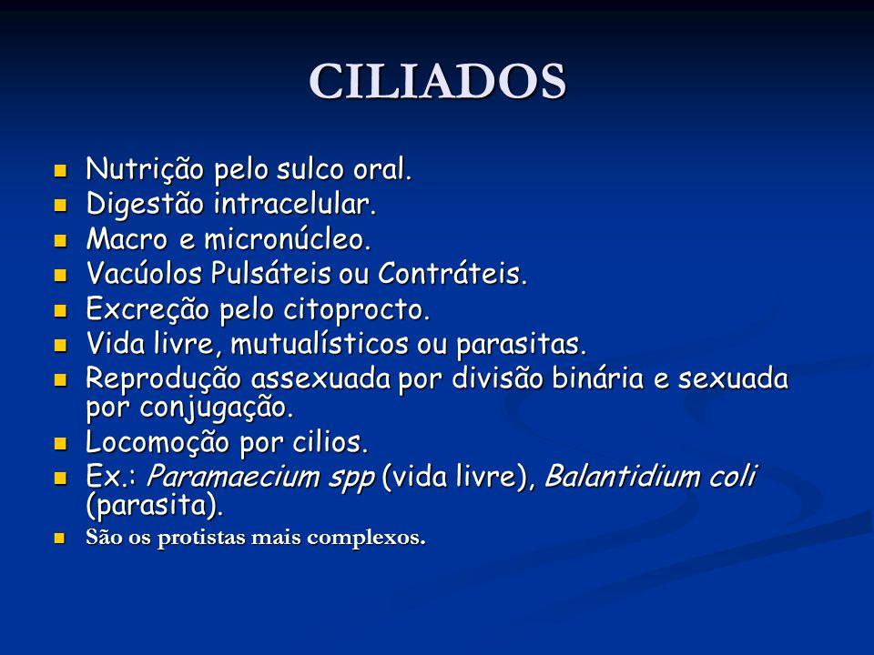 CILIADOS Nutrição pelo sulco oral.Nutrição pelo sulco oral.