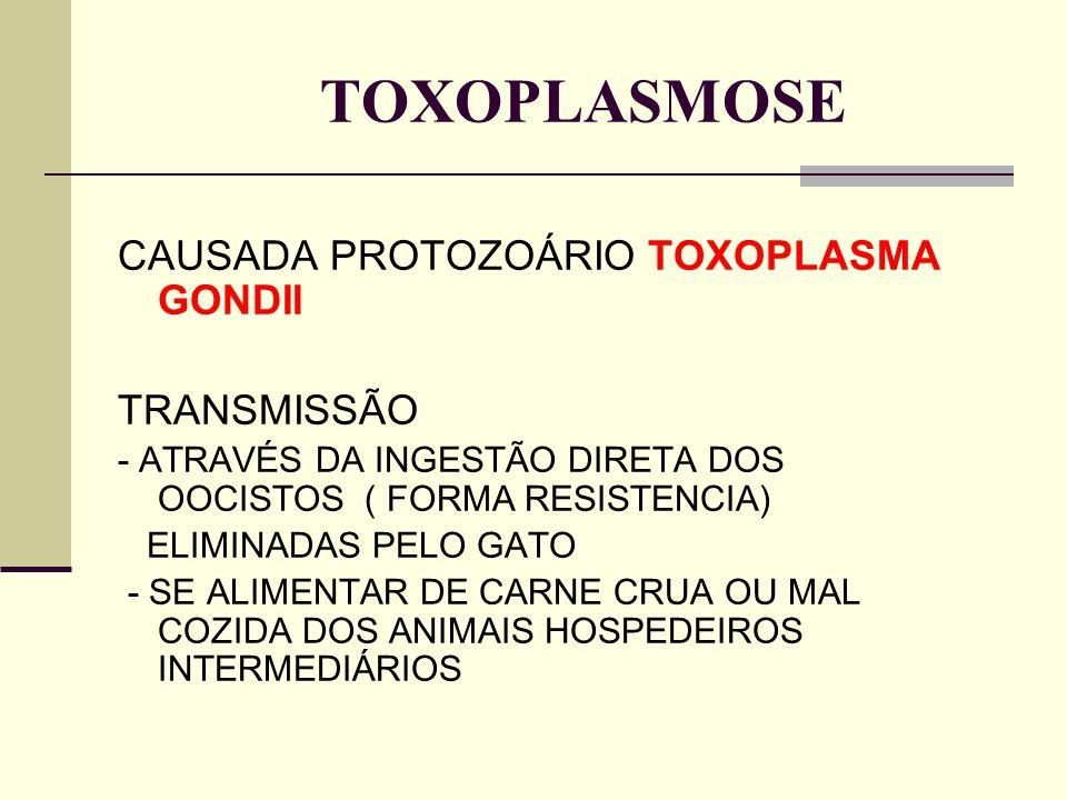 TOXOPLASMOSE CAUSADA PROTOZOÁRIO TOXOPLASMA GONDII TRANSMISSÃO - ATRAVÉS DA INGESTÃO DIRETA DOS OOCISTOS ( FORMA RESISTENCIA) ELIMINADAS PELO GATO - S