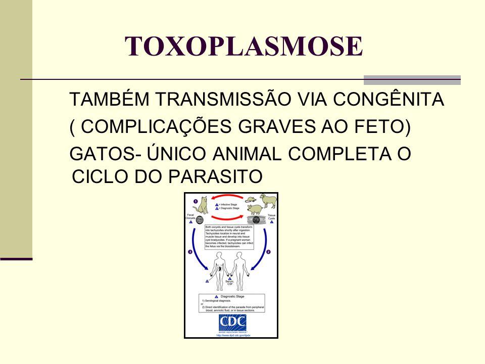 TOXOPLASMOSE TAMBÉM TRANSMISSÃO VIA CONGÊNITA ( COMPLICAÇÕES GRAVES AO FETO) GATOS- ÚNICO ANIMAL COMPLETA O CICLO DO PARASITO