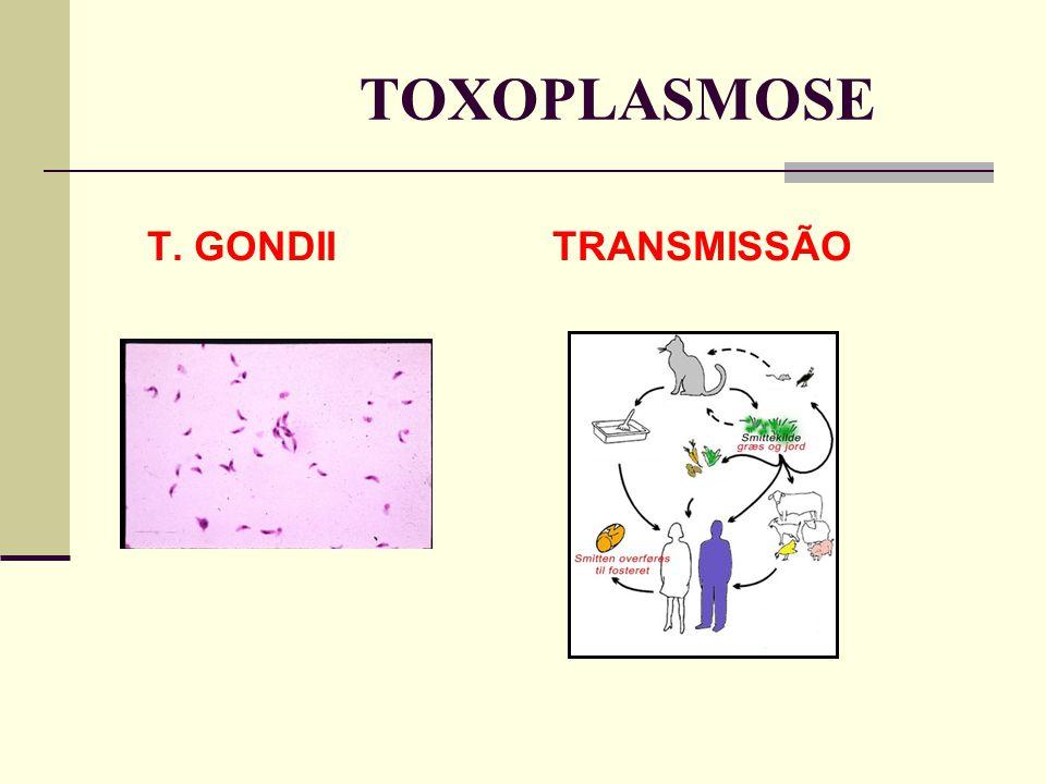 TOXOPLASMOSE T. GONDII TRANSMISSÃO