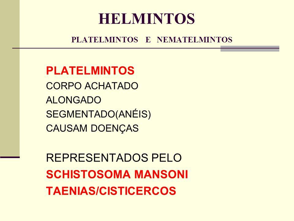 HELMINTOS PLATELMINTOS E NEMATELMINTOS PLATELMINTOS CORPO ACHATADO ALONGADO SEGMENTADO(ANÉIS) CAUSAM DOENÇAS REPRESENTADOS PELO SCHISTOSOMA MANSONI TA