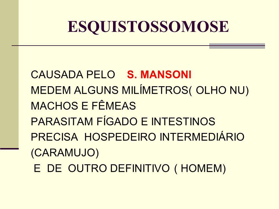 ESQUISTOSSOMOSE CAUSADA PELO S. MANSONI MEDEM ALGUNS MILÍMETROS( OLHO NU) MACHOS E FÊMEAS PARASITAM FÍGADO E INTESTINOS PRECISA HOSPEDEIRO INTERMEDIÁR