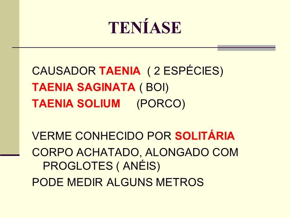 TENÍASE CAUSADOR TAENIA ( 2 ESPÉCIES) TAENIA SAGINATA ( BOI) TAENIA SOLIUM (PORCO) VERME CONHECIDO POR SOLITÁRIA CORPO ACHATADO, ALONGADO COM PROGLOTE
