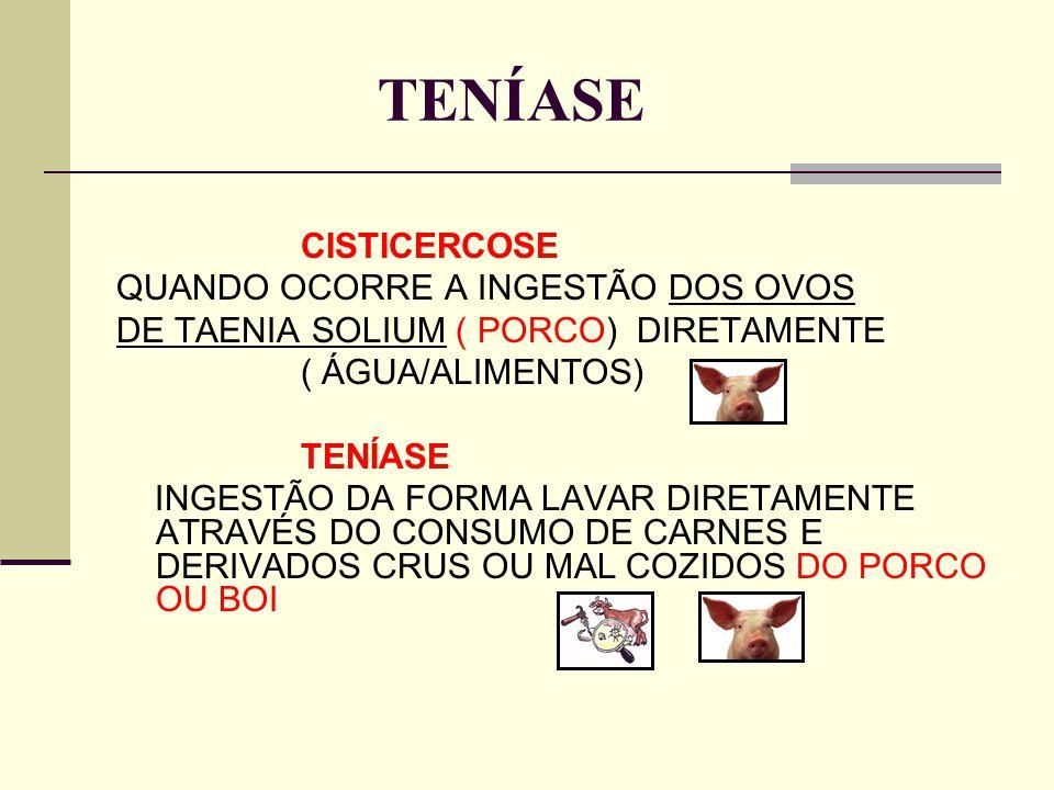 TENÍASE CISTICERCOSE QUANDO OCORRE A INGESTÃO DOS OVOS DE TAENIA SOLIUM ( PORCO) DIRETAMENTE ( ÁGUA/ALIMENTOS) TENÍASE INGESTÃO DA FORMA LAVAR DIRETAM