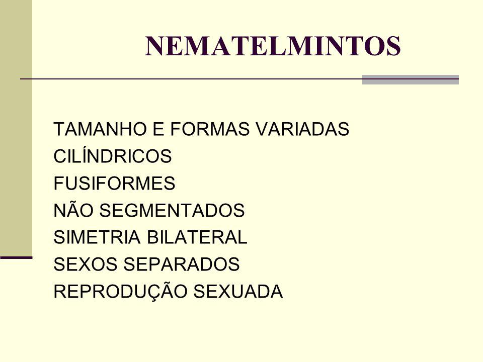 NEMATELMINTOS TAMANHO E FORMAS VARIADAS CILÍNDRICOS FUSIFORMES NÃO SEGMENTADOS SIMETRIA BILATERAL SEXOS SEPARADOS REPRODUÇÃO SEXUADA
