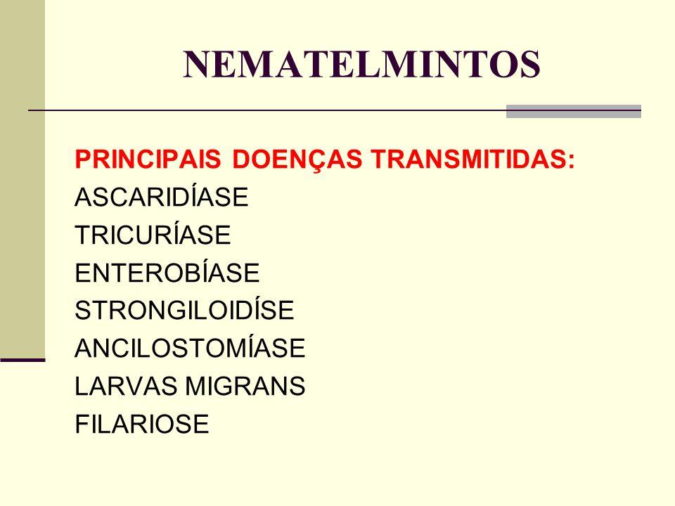 NEMATELMINTOS PRINCIPAIS DOENÇAS TRANSMITIDAS: ASCARIDÍASE TRICURÍASE ENTEROBÍASE STRONGILOIDÍSE ANCILOSTOMÍASE LARVAS MIGRANS FILARIOSE