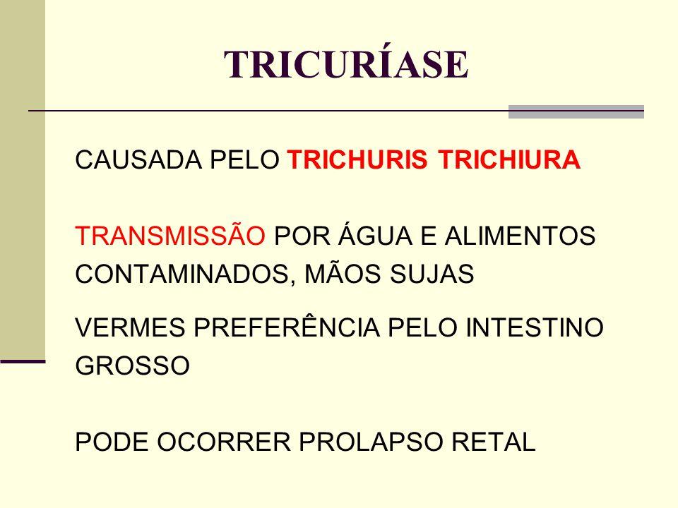 TRICURÍASE CAUSADA PELO TRICHURIS TRICHIURA TRANSMISSÃO POR ÁGUA E ALIMENTOS CONTAMINADOS, MÃOS SUJAS VERMES PREFERÊNCIA PELO INTESTINO GROSSO PODE OC