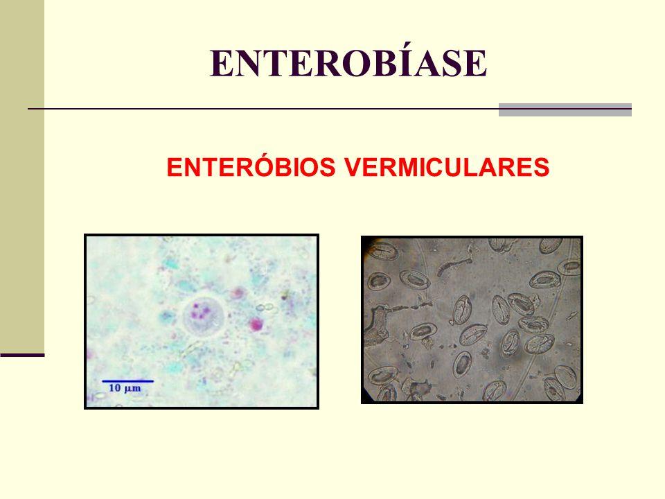ENTEROBÍASE ENTERÓBIOS VERMICULARES