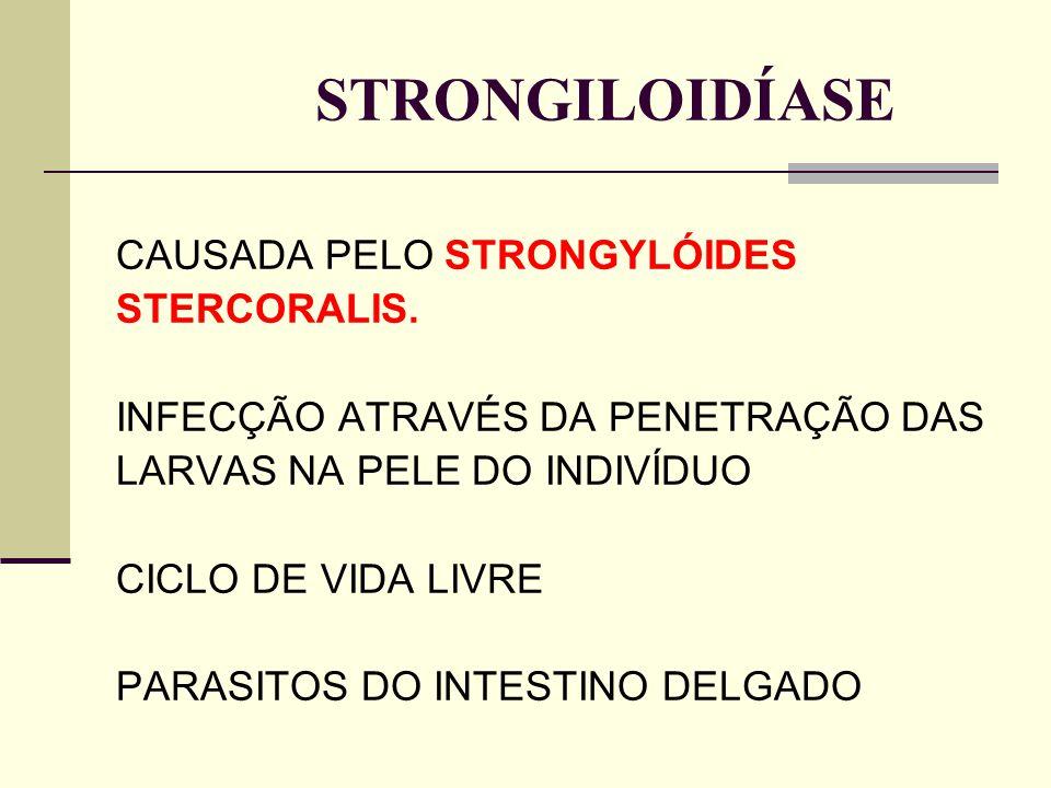 STRONGILOIDÍASE CAUSADA PELO STRONGYLÓIDES STERCORALIS. INFECÇÃO ATRAVÉS DA PENETRAÇÃO DAS LARVAS NA PELE DO INDIVÍDUO CICLO DE VIDA LIVRE PARASITOS D