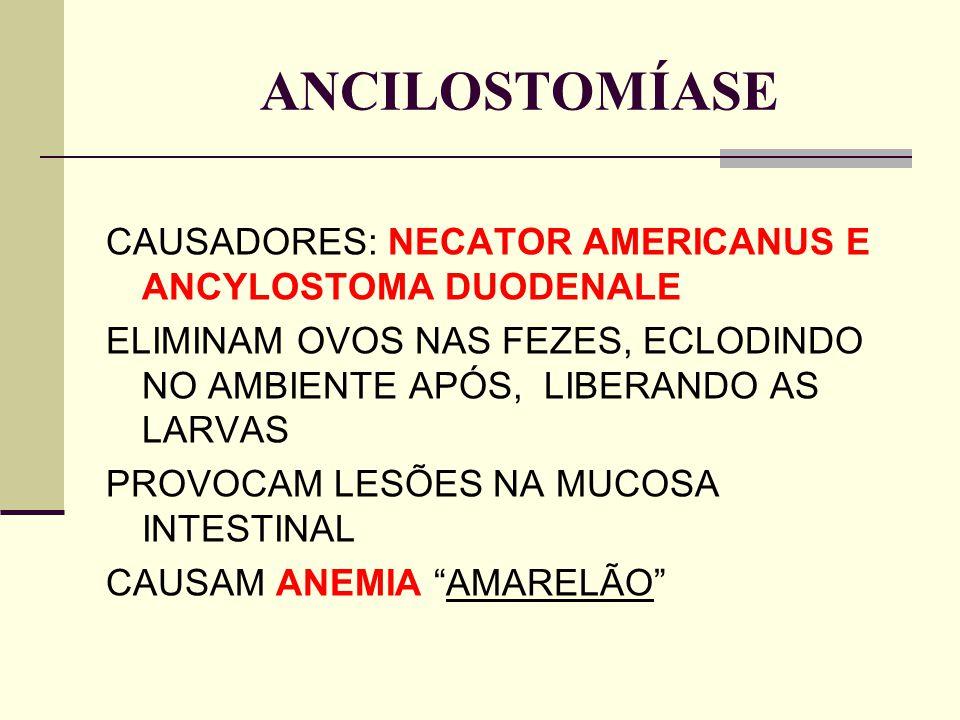 ANCILOSTOMÍASE CAUSADORES: NECATOR AMERICANUS E ANCYLOSTOMA DUODENALE ELIMINAM OVOS NAS FEZES, ECLODINDO NO AMBIENTE APÓS, LIBERANDO AS LARVAS PROVOCA