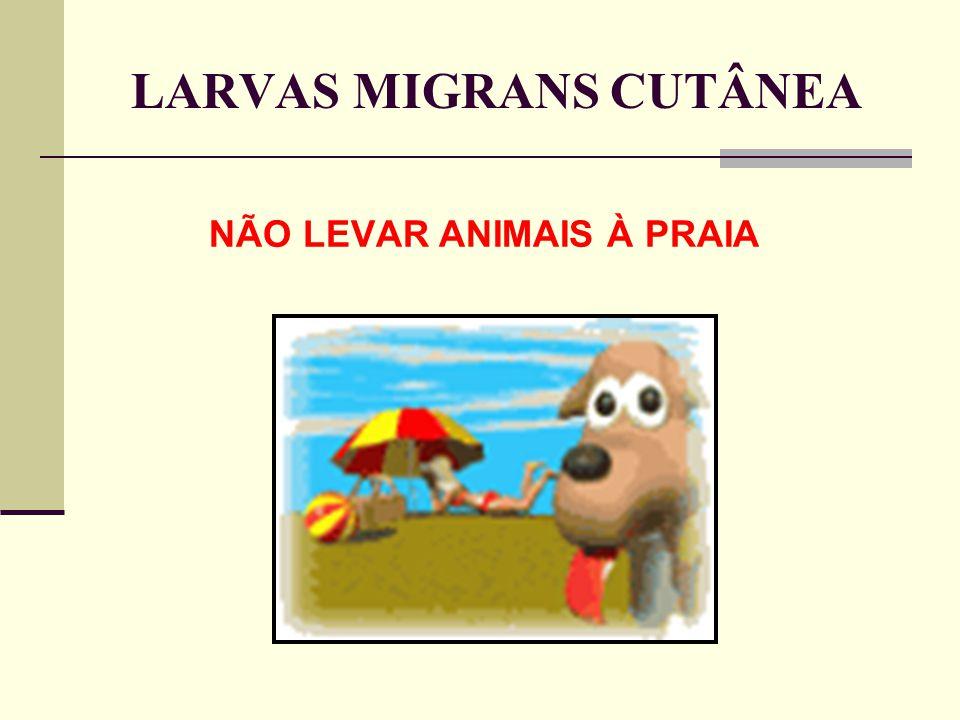 LARVAS MIGRANS CUTÂNEA NÃO LEVAR ANIMAIS À PRAIA