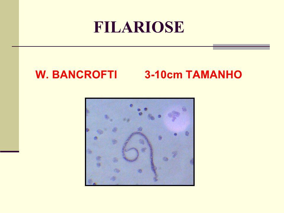 FILARIOSE W. BANCROFTI 3-10cm TAMANHO
