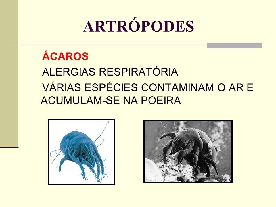 ARTRÓPODES ÁCAROS ALERGIAS RESPIRATÓRIA VÁRIAS ESPÉCIES CONTAMINAM O AR E ACUMULAM-SE NA POEIRA