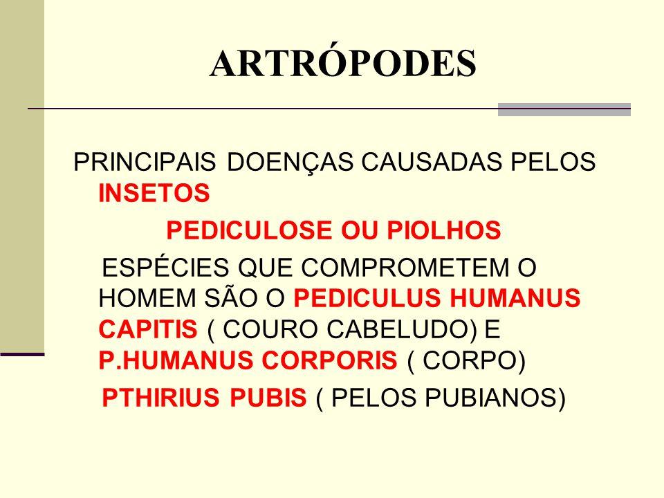 ARTRÓPODES PRINCIPAIS DOENÇAS CAUSADAS PELOS INSETOS PEDICULOSE OU PIOLHOS ESPÉCIES QUE COMPROMETEM O HOMEM SÃO O PEDICULUS HUMANUS CAPITIS ( COURO CA