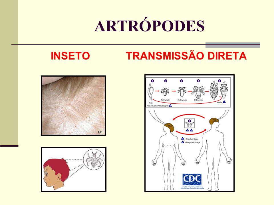 ARTRÓPODES INSETO TRANSMISSÃO DIRETA