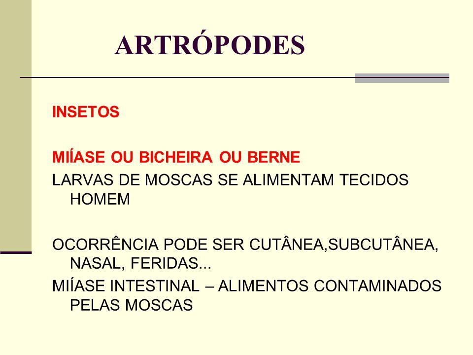 ARTRÓPODES INSETOS MIÍASE OU BICHEIRA OU BERNE LARVAS DE MOSCAS SE ALIMENTAM TECIDOS HOMEM OCORRÊNCIA PODE SER CUTÂNEA,SUBCUTÂNEA, NASAL, FERIDAS... M
