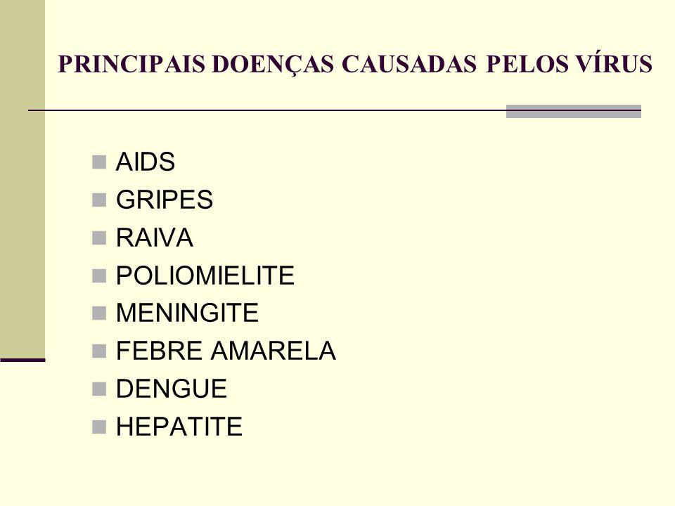 PRINCIPAIS DOENÇAS CAUSADAS PELOS VÍRUS AIDS GRIPES RAIVA POLIOMIELITE MENINGITE FEBRE AMARELA DENGUE HEPATITE