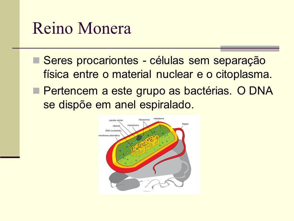 Reino Monera Seres procariontes - células sem separação física entre o material nuclear e o citoplasma. Pertencem a este grupo as bactérias. O DNA se