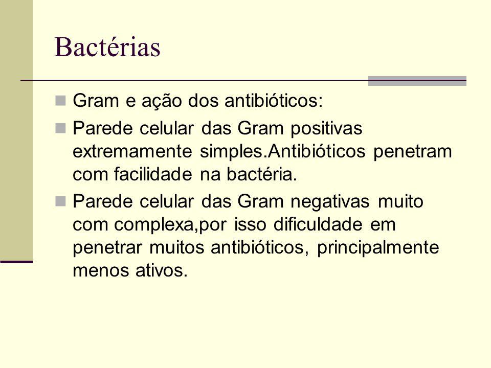 Bactérias Gram e ação dos antibióticos: Parede celular das Gram positivas extremamente simples.Antibióticos penetram com facilidade na bactéria. Pared