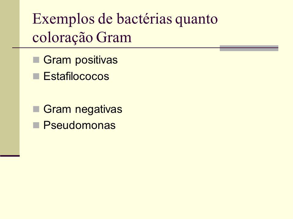 Exemplos de bactérias quanto coloração Gram Gram positivas Estafilococos Gram negativas Pseudomonas