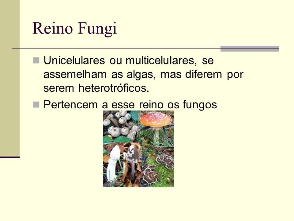 Reino Fungi Unicelulares ou multicelulares, se assemelham as algas, mas diferem por serem heterotróficos. Pertencem a esse reino os fungos
