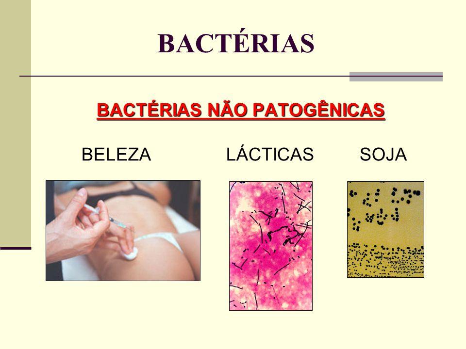 BACTÉRIAS NÃO PATOGÊNICAS BACTÉRIAS NÃO PATOGÊNICAS BELEZA LÁCTICAS SOJA BACTÉRIAS