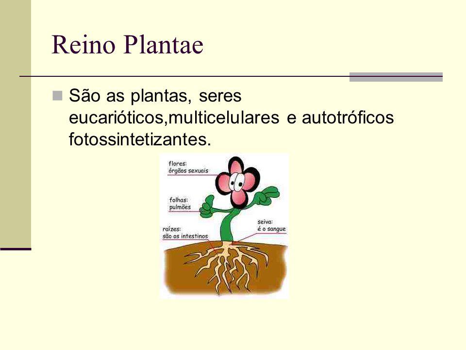 Reino Plantae São as plantas, seres eucarióticos,multicelulares e autotróficos fotossintetizantes.