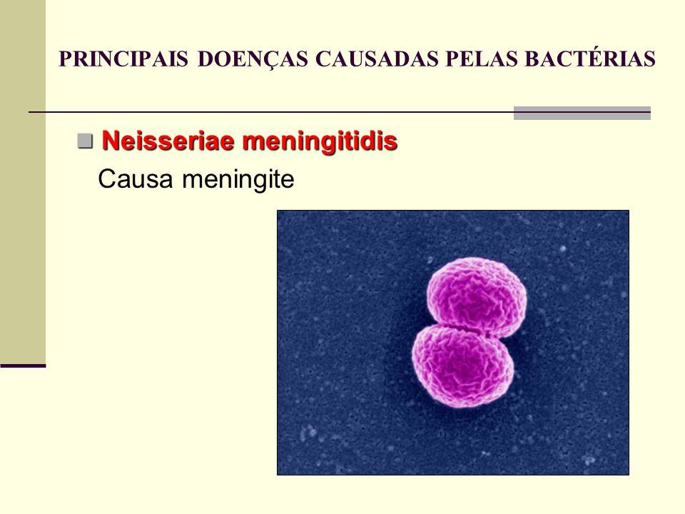 Neisseriae meningitidis Neisseriae meningitidis Causa meningite PRINCIPAIS DOENÇAS CAUSADAS PELAS BACTÉRIAS