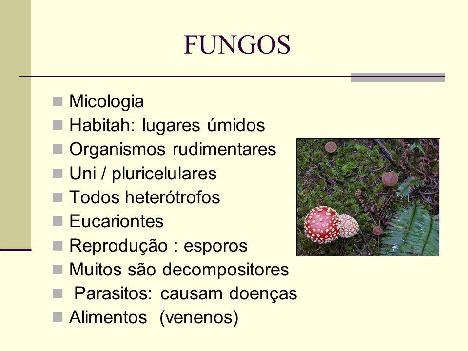 FUNGOS Micologia Habitah: lugares úmidos Organismos rudimentares Uni / pluricelulares Todos heterótrofos Eucariontes Reprodução : esporos Muitos são d