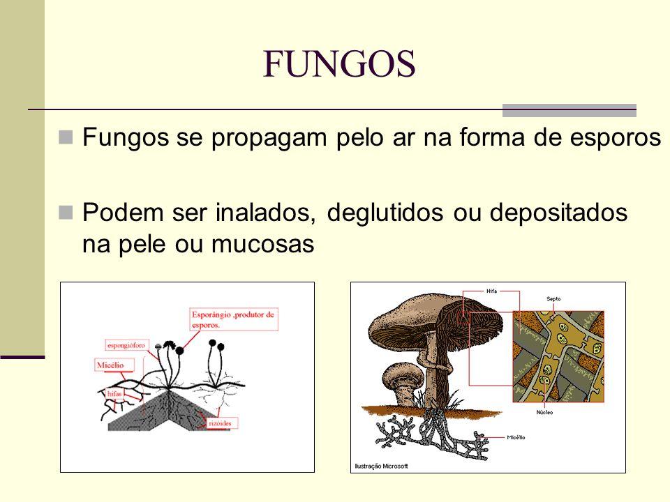Fungos se propagam pelo ar na forma de esporos Podem ser inalados, deglutidos ou depositados na pele ou mucosas FUNGOS