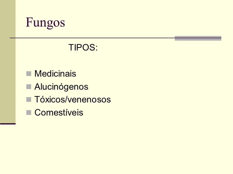 Fungos TIPOS: Medicinais Alucinógenos Tóxicos/venenosos Comestíveis