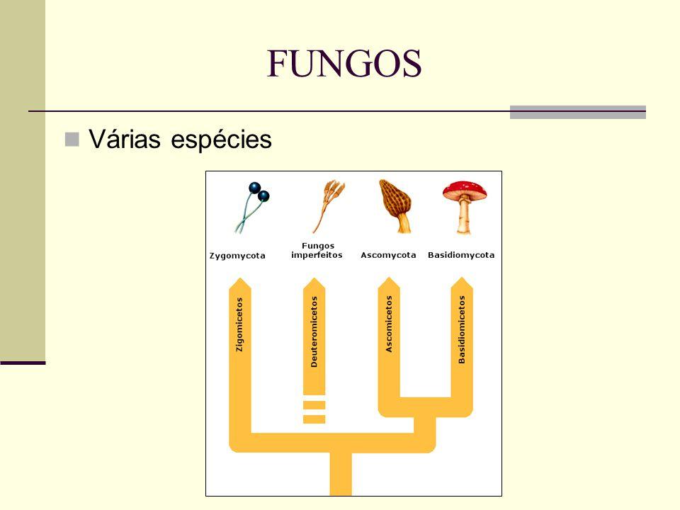 Várias espécies FUNGOS