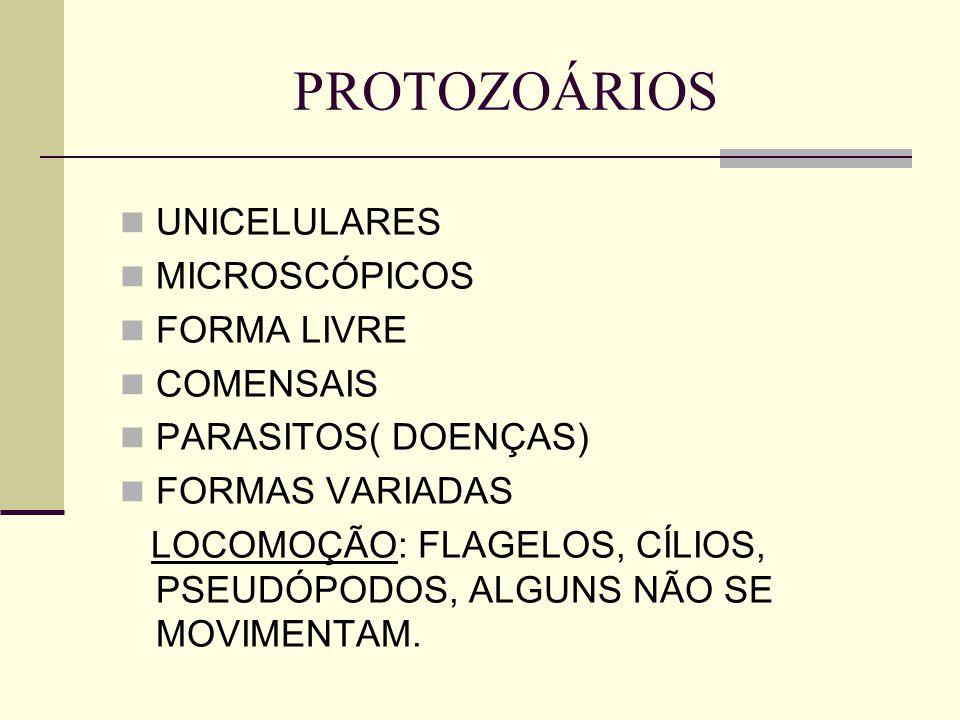 PROTOZOÁRIOS UNICELULARES MICROSCÓPICOS FORMA LIVRE COMENSAIS PARASITOS( DOENÇAS) FORMAS VARIADAS LOCOMOÇÃO: FLAGELOS, CÍLIOS, PSEUDÓPODOS, ALGUNS NÃO