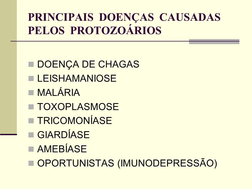 PRINCIPAIS DOENÇAS CAUSADAS PELOS PROTOZOÁRIOS DOENÇA DE CHAGAS LEISHAMANIOSE MALÁRIA TOXOPLASMOSE TRICOMONÍASE GIARDÍASE AMEBÍASE OPORTUNISTAS (IMUNO