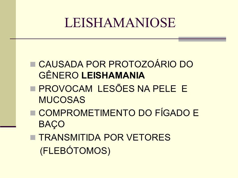 LEISHAMANIOSE CAUSADA POR PROTOZOÁRIO DO GÊNERO LEISHAMANIA PROVOCAM LESÕES NA PELE E MUCOSAS COMPROMETIMENTO DO FÍGADO E BAÇO TRANSMITIDA POR VETORES