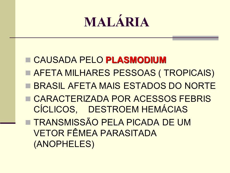 MALÁRIA PLASMODIUM CAUSADA PELO PLASMODIUM AFETA MILHARES PESSOAS ( TROPICAIS) BRASIL AFETA MAIS ESTADOS DO NORTE CARACTERIZADA POR ACESSOS FEBRIS CÍC