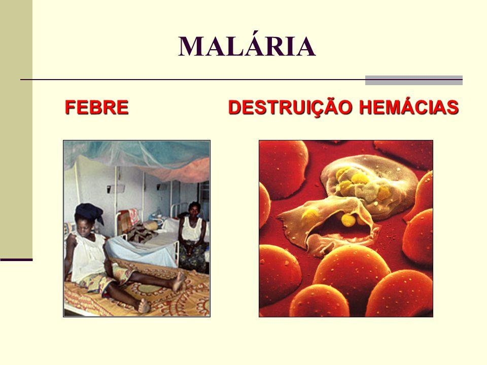 FEBRE DESTRUIÇÃO HEMÁCIAS FEBRE DESTRUIÇÃO HEMÁCIAS MALÁRIA