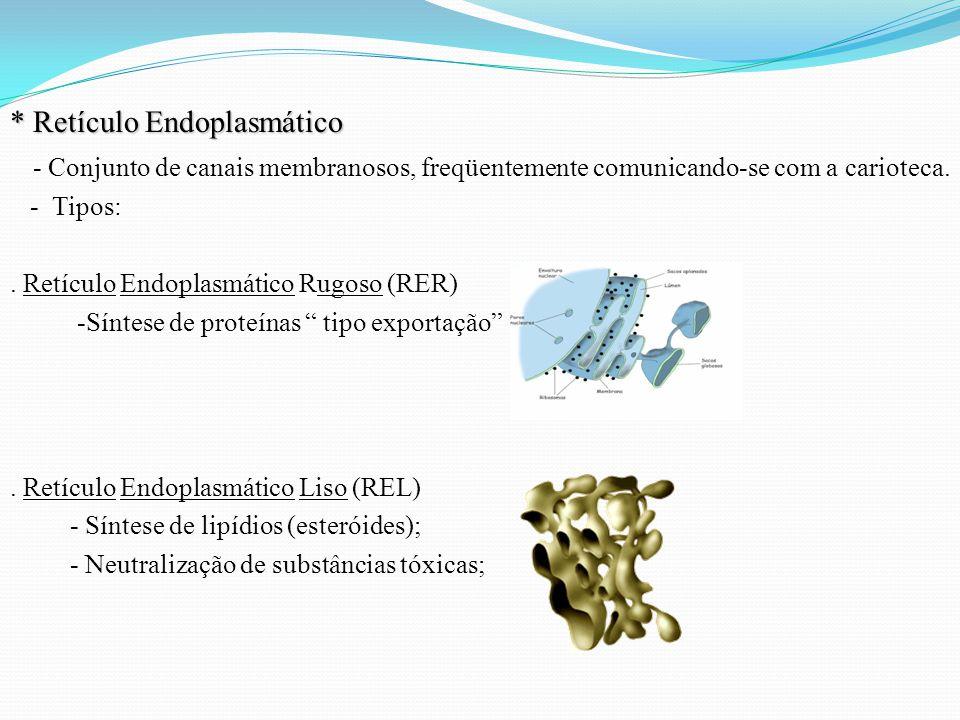 * Retículo Endoplasmático - Conjunto de canais membranosos, freqüentemente comunicando-se com a carioteca. - Tipos:. Retículo Endoplasmático Rugoso (R