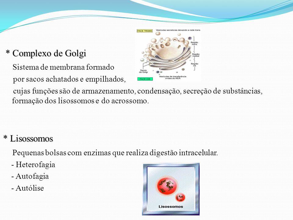 * Complexo de Golgi * Complexo de Golgi Sistema de membrana formado por sacos achatados e empilhados, cujas funções são de armazenamento, condensação, secreção de substâncias, formação dos lisossomos e do acrossomo.