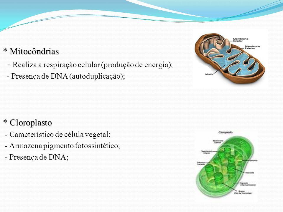 * Mitocôndrias - Realiza a respiração celular (produção de energia); - Presença de DNA (autoduplicação); * Cloroplasto - Característico de célula vegetal; - Armazena pigmento fotossintético; - Presença de DNA;