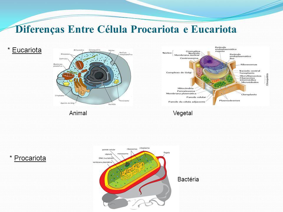 Diferenças Entre Célula Procariota e Eucariota AnimalVegetal Bactéria * Eucariota * Procariota