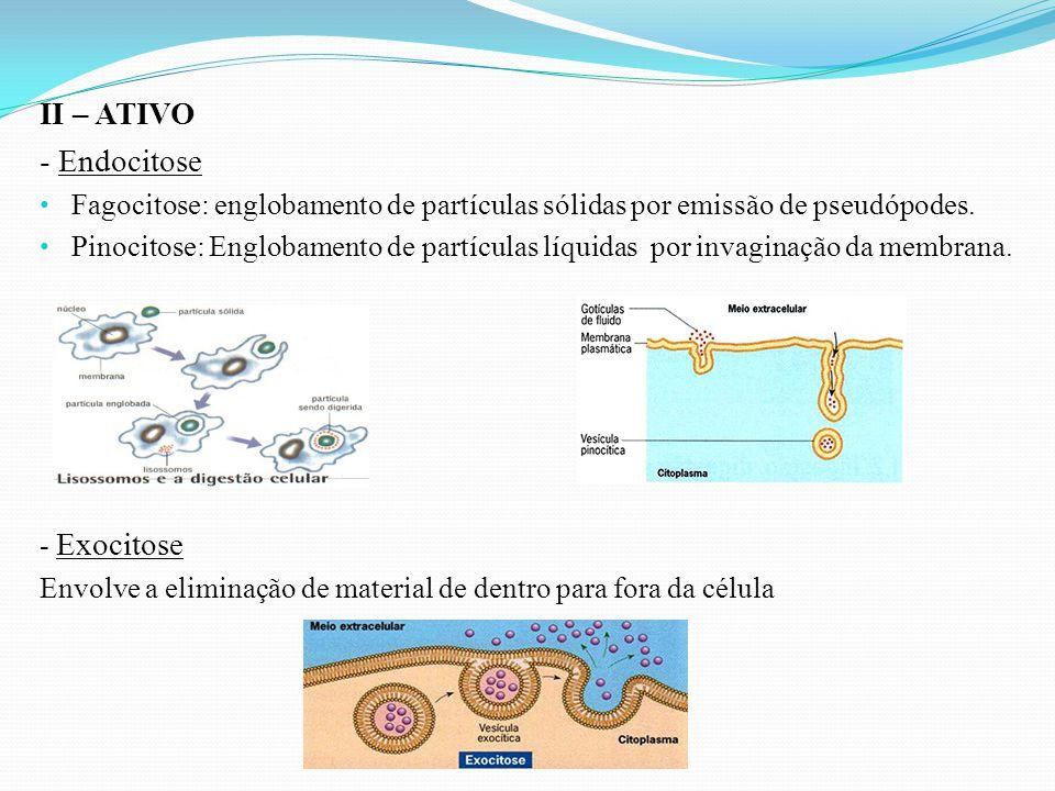 II – ATIVO - Endocitose Fagocitose: englobamento de partículas sólidas por emissão de pseudópodes. Pinocitose: Englobamento de partículas líquidas por