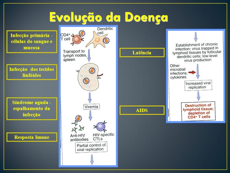 Evolução da Doença Infecção primária - células do sangue e mucosa Infecção dos tecidos linfóides Síndrome aguda - espalhamento da infecção Resposta Im