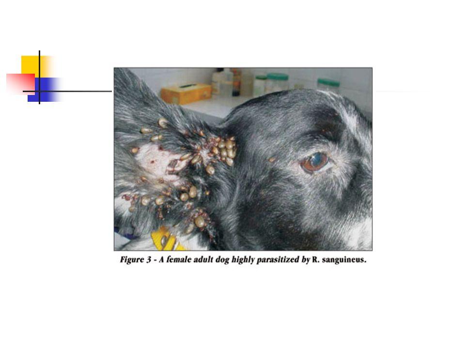 Parasitológicos + Clínicos Patente + sintomático; Subpatente + latente;