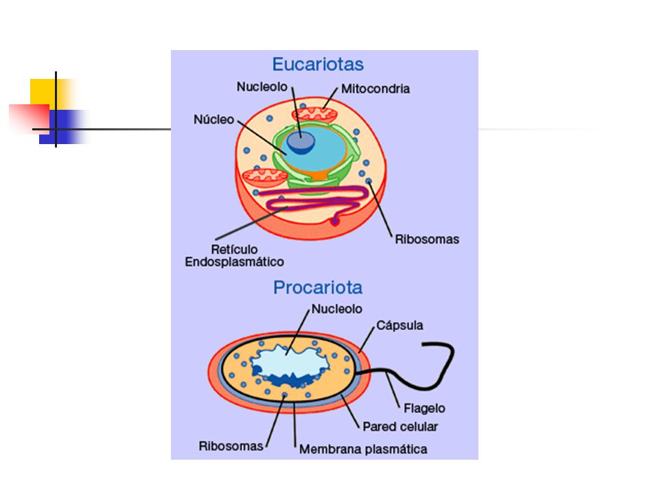 Ciclo Biológico e Hospedeiros Estenoxeno: Apenas uma espécie de hospedeiro (esteno: estrito); Ex: A.lumbricoides e E.vermicularis apenas o homem.