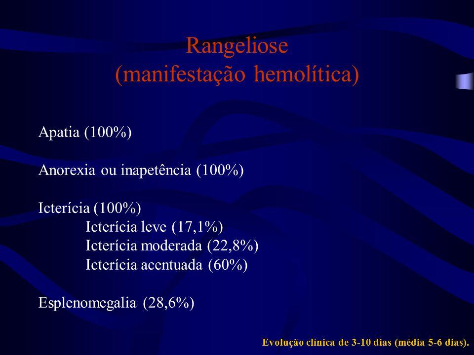 Rangeliose (manifestação hemorrágica) Hemorragias (28,6%) Petéquias e sufusões (25,7%) Pele e mucosas (25,7%) Sangramento copioso (22,8%) Orelhas (14,3%) Plano nasal (8,6%)