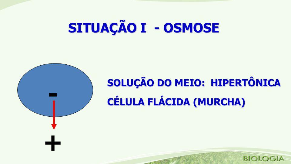 SITUAÇÃO I - OSMOSE SOLUÇÃO DO MEIO: HIPERTÔNICA CÉLULA FLÁCIDA (MURCHA) - +